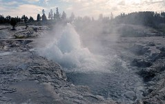 Mound Geyser... (Sea Moon) Tags: water pool crater yellowstone geyser hotspring boiling erupting doming splashing geyserite