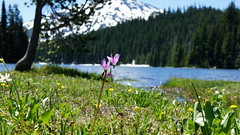 """Summer flowers by the lake • <a style=""""font-size:0.8em;"""" href=""""http://www.flickr.com/photos/87636534@N08/8156841825/"""" target=""""_blank"""">View on Flickr</a>"""