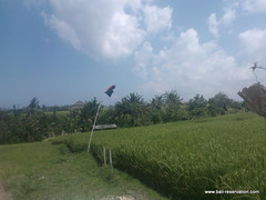 land for sale near seseh beach bali indonesia (franky_ok2) Tags: bali beach indonesia sale near free agency buy land hold reservation kuta seseh