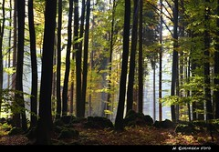 im MrchenWald IV (H. Eisenreich Foto) Tags: autumn trees light sun mist fall nature leaves st forest bayern bavaria licht nikon mood laub herbst natur hans upper otoo rays sonne wald bltter bume sonnenstrahlen stimmung 2012 oberpfalz sankt dunst strahlen palatinate velburg flickraward eisenreich colomann