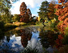 Herbst an meinem Lieblingsteich (karinrogmann) Tags: autumn flora herbst köln autunno botanicalgarden botanischergarten naturesfinest giardinobotanico blinkagain