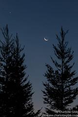 Good morning, Lafayette! (Charlotte Hamilton Gibb) Tags: california morning trees moon sunrise dawn crescent lafayettecalifornia charlottegibbphotography