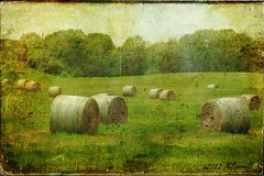 Round Bales (Passion4Nature) Tags: rural michigan harvest textures hay upnorth hayfield bales ie pastoral motat roundbales artmix moonseclipse yourpreferredphoto tatot artistictreasurechest magicuniverse magicunicornverybest magicunicornmasterpiece magicuniversemasterpieces textureinfinitebook moonseclipsehighlights artmixhighlights
