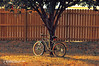 #53 Another Long Fall Has Come and Gone! (Abdulla Attamimi Photos [@AbdullaAmm]) Tags: red usa tree fall bike bicycle yellow photography photo nikon photos photographic chilly 2008 2012 صور amm عبدالله صورة d90 شجرة سيكل شتاء برد خريف tamimi التميمي مصور altamimi جفاف attamimi ضياع ذبول تساقط براد abdullaamm عبداللهالتميمي المصورعبداللهالتميمي المصورالفوتوغرافيعبداللهالتميمي abdullaattamimi abdullahattamimi abdullaammcom هبةالتميمي