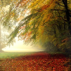 FALL-ing.... (Weirena(AWAY)) Tags: autumn trees light fall love nature square austria landscapes nikon flickr colours seasons friendship textured weirena magicunicornverybest