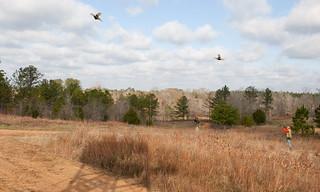 Alabama Quail Hunt - Davis Quail 11