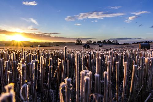 Heads Up (Tyrebagger) sky sun sunrise dawn scotland frost aberdeenshire farmland sigma1770 canon60d newmachar