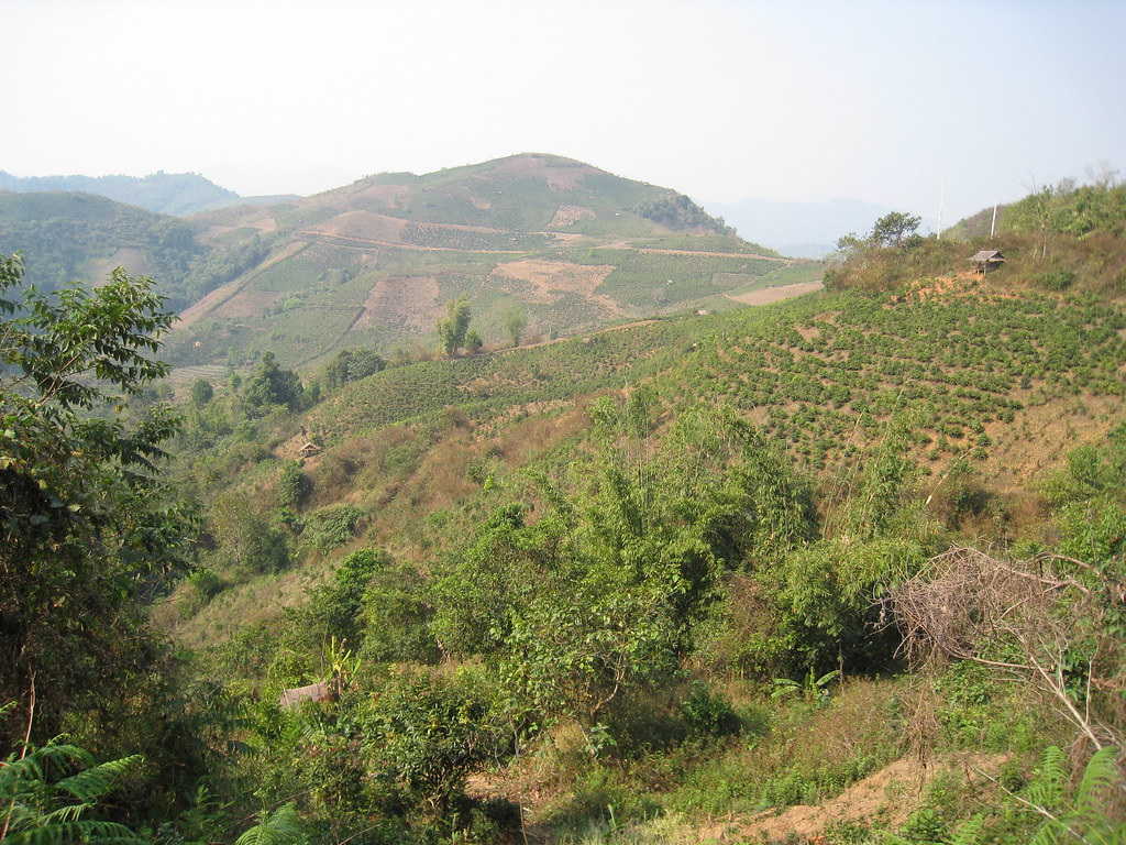 The mountains around Phongsali, Laos