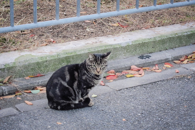 Today's Cat@2012-11-15