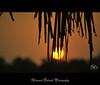 the setting sun (Animesh2000) Tags: ocean road blue light sunset red sea orange cloud india flower macro reflection art home nature floral beautiful leaves night photography mono pattern artistic dusk kerala photograph calicut animesh debnath