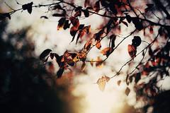 Winter light (Perolo Orero - www.orerofotografia.com -) Tags: autumn winter light red tree art luz valencia hojas arbol photography yahoo google rojo nikon photographer arte lips manuel otoo invierno pero fotografa krop orero orerofotografia wwworerofotografiacom