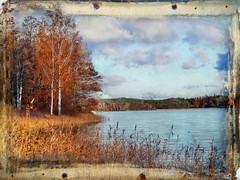 Delicious autumn! (Bessula) Tags: autumn sky lake tree texture reed landscape sweden photomix bessula tatot magicunicornverybest magicunicornmasterpiece rememberthatmomentlevel1 bestevergoldenartists creativephotocafe