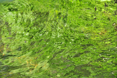 abstract forest stream green water background (Maxim Tupikov) Tags: light wallpaper lake abstract reflection green art texture nature water pool swim relax bath shiny aqua stream warm pattern underwater bright vibrant background live deep vivid peaceful wave blurred surface drop illuminated clean clear reflect refraction rippled transparent splash pure refreshing effect liquid tranquil sparkling textured refresh