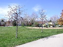 Photo - Christiansen Park