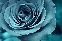 Feeling blue? (Jamie-Owens) Tags: