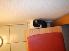 Gotcha! (Ottmar H.) Tags: cat chat gato katze macska  kater  tomcat