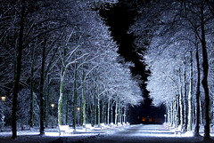 Snowy benches of light (CGilles7) Tags: park light white snow black tree night bench frozen noir streetlamp lumire magic nobody neige dsseldorf arbre blanc personne banc gel magique ferique faiirytale stefansous uvauvb coth5 mygearandme mygearandmepremium mygearandmebronze mygearandmesilver mygearandmegold mygearandmeplatinum mygearandmediamond ruby10 ruby15 rememberthatmomentlevel4 rememberthatmomentlevel1 rememberthatmomentlevel2 rememberthatmomentlevel3 me2youphotographylevel2 me2youphotographylevel3 me2youphotographylevel1 gilles7 rememberthatmomentlevel5 rememberthatmomentlevel6 me2youphotographylevel4 ruby20 rubyfrontpage euroga2002 benchoflight