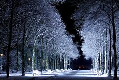 Snowy benches of light (CGilles7) Tags: park light white snow black tree night bench frozen noir streetlamp lumière magic nobody neige düsseldorf arbre blanc personne banc gelé magique féerique faiirytale stefansous uvauvb coth5 mygearandme mygearandmepremium mygearandmebronze mygearandmesilver mygearandmegold mygearandmeplatinum mygearandmediamond ruby10 ruby15 rememberthatmomentlevel4 rememberthatmomentlevel1 rememberthatmomentlevel2 rememberthatmomentlevel3 me2youphotographylevel2 me2youphotographylevel3 me2youphotographylevel1 gilles7 rememberthatmomentlevel9 rememberthatmomentlevel5 rememberthatmomentlevel6 me2youphotographylevel4 ruby20 rubyfrontpage rememberthatmomentlevel10 euroga2002 benchoflight