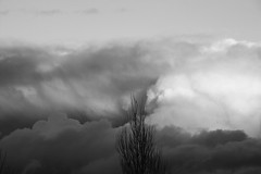(provincijalka) Tags: sky music storm clouds dark one big threatening branches layers breathe deus treetop standtall overwhelming rollingin rightasrain provicijalka