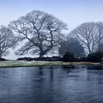 3 tree pond