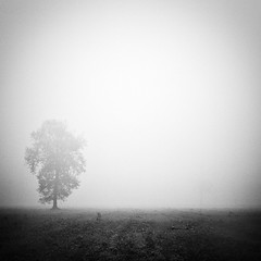 dove svaniscono i rumori #1 (* onda *) Tags: cold tree fog loneliness close silence