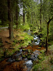 Burn in the forest / Bach im Wald (Caledoniafan (Astrid)) Tags: caledoniafan harz harzmountains 2015 nature natur nikon nikoncoolpixl820 germany deutschland braunlage kleinebode bode moosbrcke