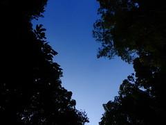 Look at the sky while u in forest (Azizasrar Photoghraphy) Tags: amateurtobepro kelantan travellight slowshutter morning motherofnature