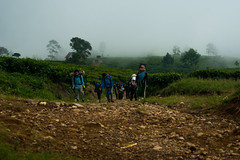 To the peak (dama qoriy) Tags: fog hiking teaplantation mountaineering