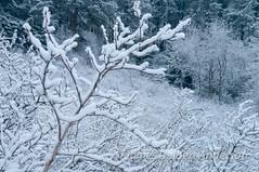 Snowy Clearing (jamesdelbertanderson) Tags: kamiakbutte kamiakbuttecountypark palouse whitmancounty washington nature pnw snow winter easternwashington inlandnorthwest