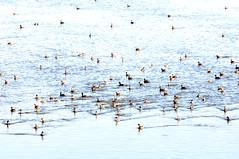 DSC_0101-001 (Great Salt Lake Images) Tags: summer morning causeway antelopeisland greatsaltlake utah