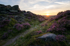 Below Burbage Rocks (SLP_Photography) Tags: burbage rocks sunset peak district national park derbyshire sony a7ii 1635mm heather sun gritstone