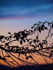 Sunset 20141006 (caligula1995) Tags: 2014 clouds plumtree sunset
