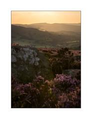 Hope (danjh75) Tags: hope castleton peakdistrict derbyshire d610 heather haze gritstones goldenhour sunset ngc