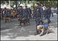 Guarda municipal GOC (wilphid) Tags: salvador bahia brsil brasil 7desetembro ftenationale arme dfil militaires soldats rue