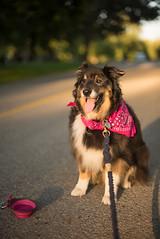 (christinemcroberts) Tags: nikond750 nikkor50mmf14 nikkor50mm nikkor nikon 50mmf14 primelens light outdoors outside dogphoto petphotography pets pet dogs dog
