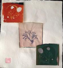 The Many Lives of a Polaroid Algae (angel pastor) Tags: polaroid impossible algae seaweed algas sea mar pastor angelpastor sx70