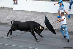 Azores - Terceira island (JOAO DE BARROS) Tags: bull bullfight azores portugal animal terceira street people festivities