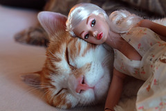 Cats and Dolls (Poupe Chinoise) Tags: cats kitten dolls nemo fashiondoll cutekitten cutepets cuddlykitten fashionroyalty integritytoys poppyparker petsanddolls babyitsyoupoppyparker