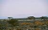 On the way to Bardai, Northern Chad (michael_jeddah) Tags: sahara desert chad tibesti bardai arkiafera