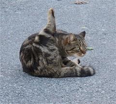 QUALE DISTRAZIONE  HA  ... (liliana hollnder) Tags: catnipaddicts