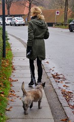 Otto and Tina out for a walk (osto) Tags: woman dog chien pet animal cane denmark europa europe sony hond perro terrier zealand otto pies tina dslr scandinavia danmark cairnterrier a300 kpek sjlland  osto alpha300 osto november2012