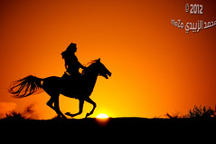 :   1164 (momazo) Tags: sunset horse sun silhouette night mare run knight     faras