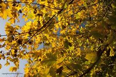 Falling (marinaekabubi) Tags: autumn falling autunno stagioni