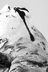 Black and White (austinspace) Tags: portrait blackandwhite woman white black studio couple paint duo alienbees