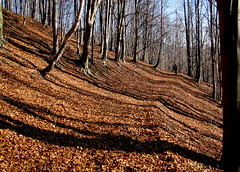 hossz rnykok / long shadows (debreczeniemoke) Tags: autumn shadow mountains forest landscape afternoon land hegy transylvania transilvania tj tjkp gutin erdly sz erd rnyk dlutn canonpowershotsx20is