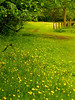 "Wild Flowers in Meadow • <a style=""font-size:0.8em;"" href=""http://www.flickr.com/photos/90155795@N05/8200799581/"" target=""_blank"">View on Flickr</a>"