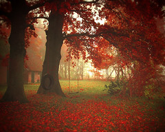 """swing (soleá) Tags: autumn red nature rural photography colours herfst swing nostalgia leafs drenthe ruinen schommel soleá indospan """"carmengonzalez"""" lasmusatriste"""