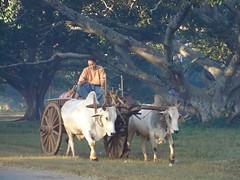 Birmania 2006 (Corrafranco) Tags: travel asian asia emotion burma east traveller peoples myanmar oriente viaggi popoli viaggiare birmania