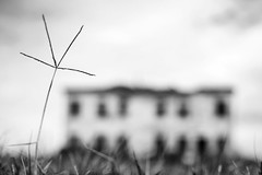 house in the field #11 (nicola tramarin) Tags: bw italy house grass casa italia erba blade ts biancoenero filo veneto sfocato tiltshift rovigo polesine ts45mm nicolatramarin