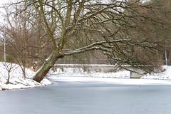 Kungsparken, Malmo, Sweden (Yoshing_) Tags: travel bridge winter lake snow tree ice river landscape photography frozen europe day seasons sweden malmo lensblr photographersontumblr
